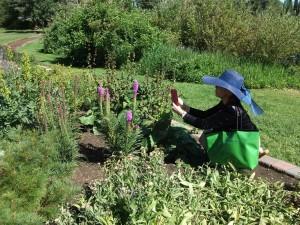 dscf0121a-devonian-gardens