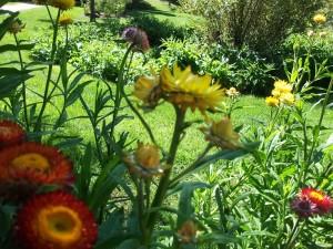 dscf0141a-devonian-gardens
