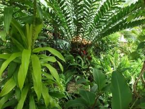 dscf0160a-tropical-devonian