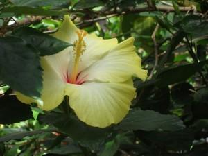 dscf0165-tropical-devonian